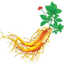 Ginseng Rosu Bio Organic