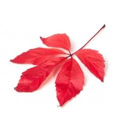 Vita de vie rosie Bio, 120 capsule, prospect, beneficii, doze, indicatii, efecte, pret