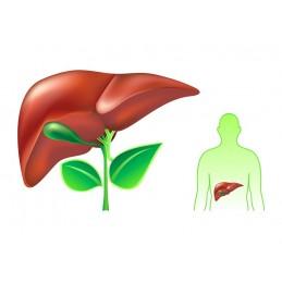 Desmodium Adscendens, hepatoprotector, 60 capsule, prospect, doze, efecte, indicatii, pareri, pret