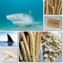 Cartilaj de rechin 240 capsule
