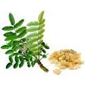 Extract tamaie, BoswelliaPhyt 250 mg 60 Capsule, pret, beneficii, prospect, efecte, pareri, indicatii