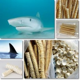 Cartilaj de rechin 120 capsule, prospect, administrare, efecte, pret, beneficii