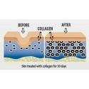 Colagen Hidrolizat, Tip 1 si 3, 120 Capsule