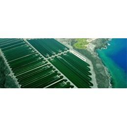 Oemine Iod din alge - 60 capsule