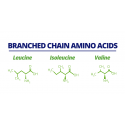 BCAA (Branched Chain Amino Acids) 240 Capsule