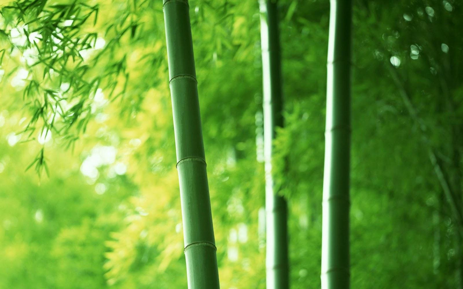 Siliciu Organic extras din bambus